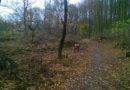 Kácení stromů v Habrové